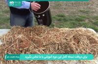 اصول تولید و رشد قارچ در ظرف پلاستیکی