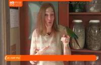 آموزش تربیت طوطی - 5 نشانه بیماری پرنده