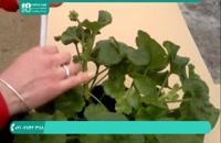 آموزش پرورش و روش نگهداری گل و گیاهان آپارتمانی
