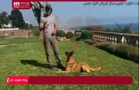 اشتباهات رایجی که مربی در حین تربیت سگ آن ها را انجام میدهد