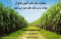 آلیون علف کش انتخابی مزارع نیشکر | Alion