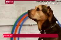 آموزش تعلیم دست دادن به سگ خانگی
