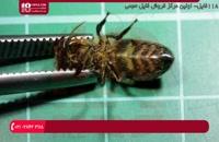 آموزش زنبورداری - تشریح میکروسکوپی