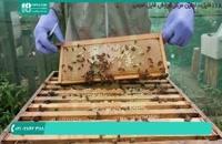 بررسی کندو جهت برداشت عسل | آموزش زنبورداری 09130919448