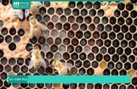 آموزش زنبورداری - آموزش ایجاد اولین کندو