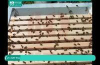 فیلم آموزش زنبورداری نوین ایران