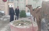 Arbaeen Con Sheij Qomi 07, Camellos para sacrificar en Arbaeen | #Arbaeen #Arbaeen_con_Sheij_Qomi