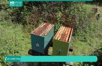 زنبورداری مدرن - تقسیم یک کندو به دو کندو زنبور عسل
