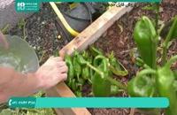 نحوه آماده سازی گلخانه برای فصل زمستان