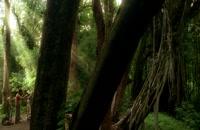 دانلود دوبله فارسی سریال گمشده Lost 2004 فصل 3 قسمت 6